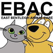 Vet at East Bentleigh Animal Care